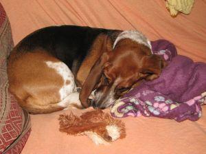 Lucy_asleep