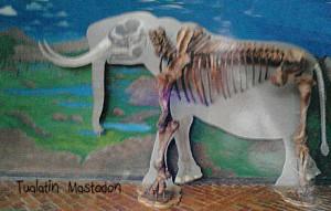 Tualatin-Mastodon-20120321_37-300x191